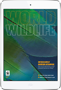 WWF Digital Magazine. More on www.magpla.net MagPlanet #TabletMagazine #DigitalMag