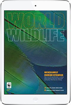 WWF Digital Magazine. More on www.magpla.net MagPlanet #TabletMagazine #DigitalMag